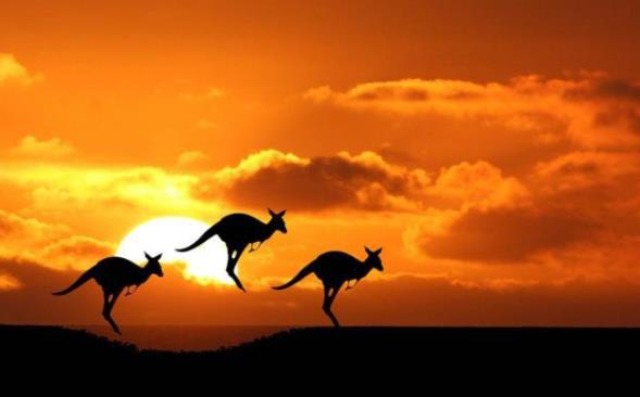 """澳农业期待搭乘""""一带一路""""顺风车"""