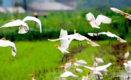 尊重自然 顺应自然 保护自然  共建万物和谐的美丽家园(共建地球生命共同体)